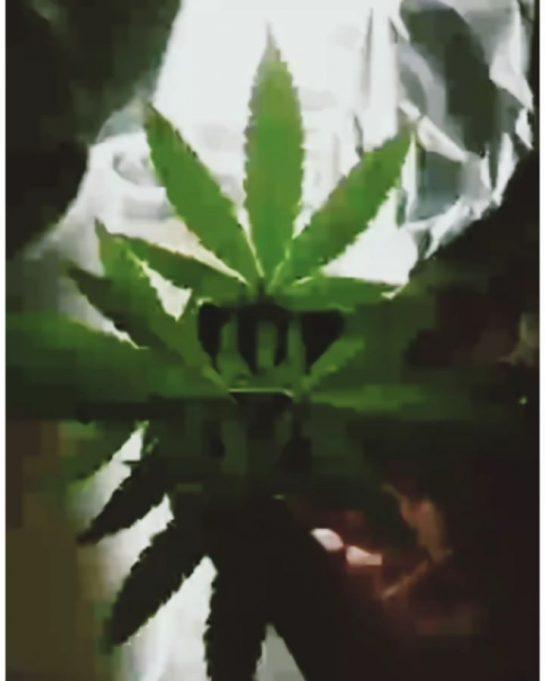 ganja love forever #weedsmoke #weedtime #weedbabes #weedinstagram #weedporn420 #weedchile #weedmeme #weedingday #weedmemesdaily #weed420feed #weedstayhiigh…