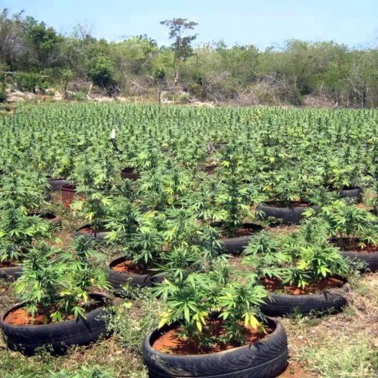 Follow @ for daily weed and memes – #weed #cannabis #cannabiscommunity #weedporn #marijuana #thc…