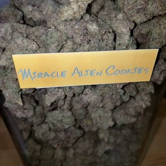 The Magnificent MAC. Our favorite strain right now. . #PureBeauty #MAC #MiracleAlienCookies #Gas #Dank…