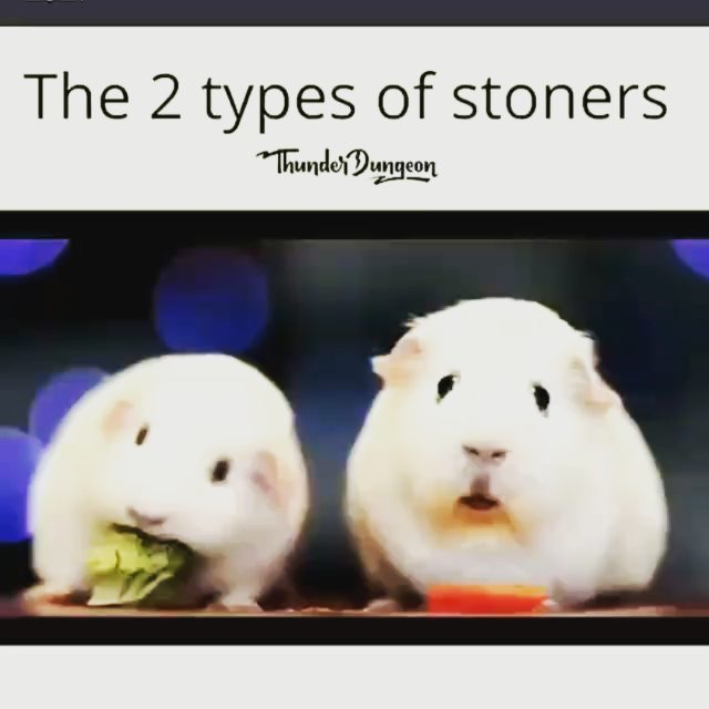 Share if you can relate . . . #rat #rats #whiterat #whiterabbit #mouse #mouses…