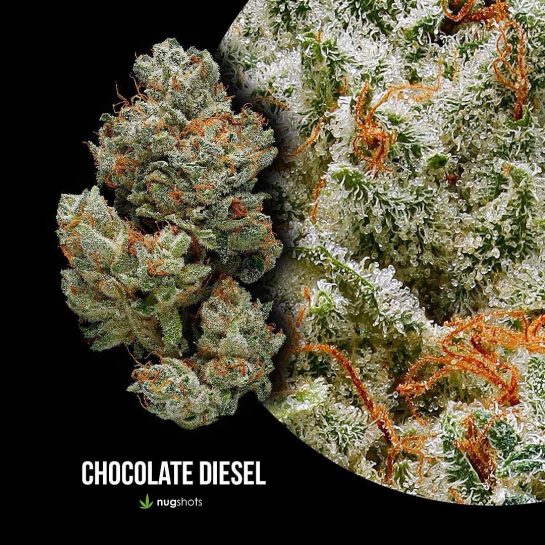 Sick shot of some chocolate diesel! Courtesy of: @nugshots Follow:@weedgeezer Follow:@weedgeezer #funny #weedmeme #weedmemesdaily…