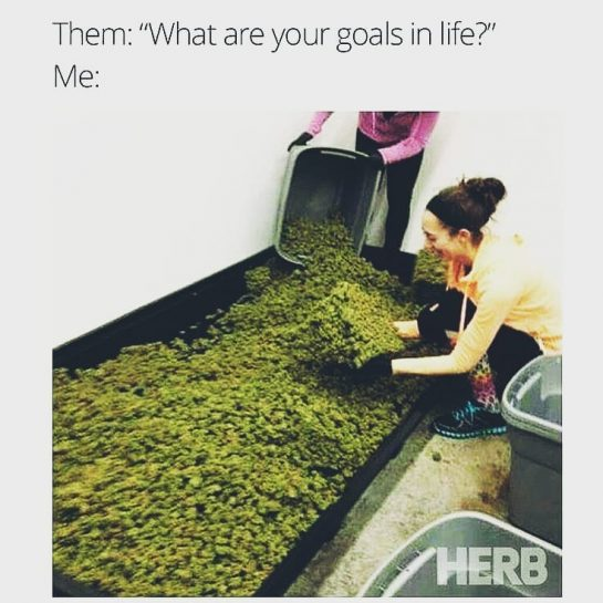 What are those goals?? . . . #weedmeme #weed #weedmemes #memes #meme #cannabis #weedporn…