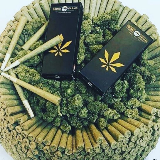 Follow @ ———————————————————————— #weedporn #weed #weedmeme #smoking #smokingweed #skunk #flavours #drug #drugs #ganjagirls #ganjagirl…