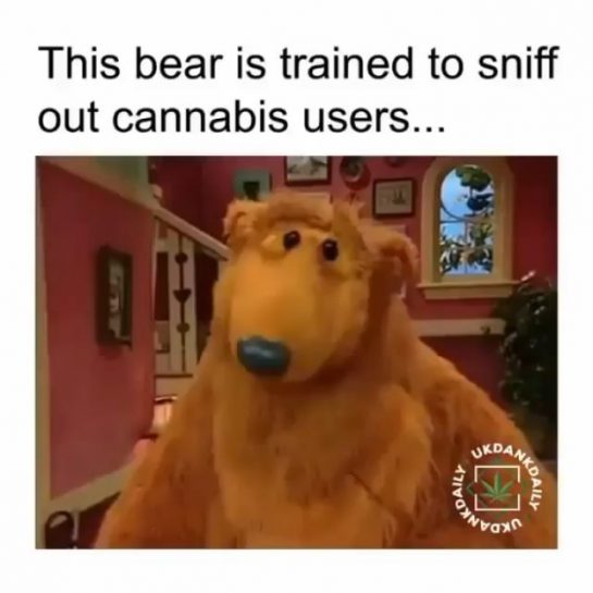 . . . . #420 #weedstagram420 #420 #smokeweedeveryday #balleralert #tsr #weshouldsmoke #420family #weedstagram…