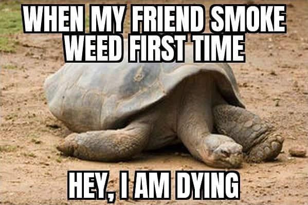 This is really , Agree??? #weedmeme #weed #weedmemes #memes #meme #cannabis #weedporn #stoner #weedhumor…